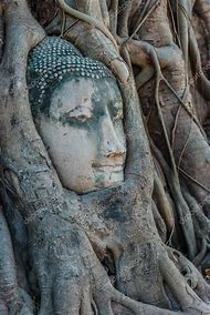 The Banyan Tree in South and SE Asia: The World Tree